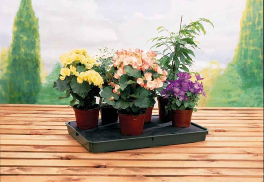 Pflanzenschale mit Kapillarmatte XL