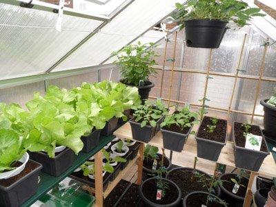 Gemüse im Gewächshaus anbauen im Jahresverlauf
